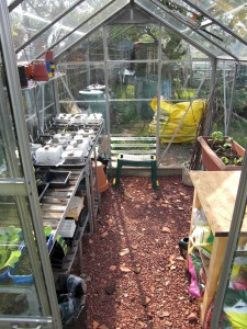 Seedlings growing in my North Sheen allotment greenhouse - sadly I had to give up the allotment when I moved some years ago.